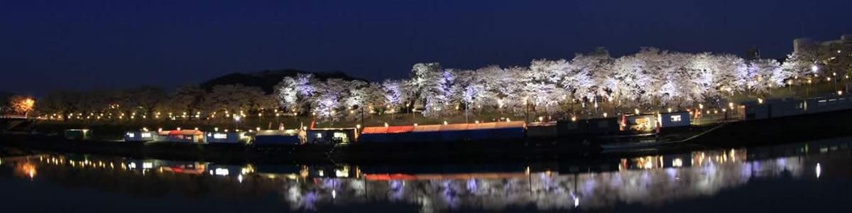 大河原町の河川敷での夜桜風景です。